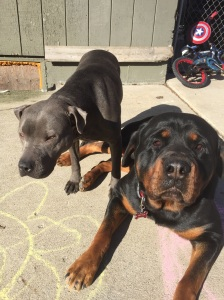 Maui (Nala) & Hector