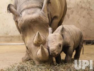 mom n baby rhino